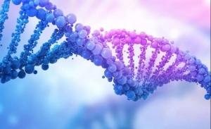 """情人节,愿每一对情侣""""执子之手与子偕老""""!尊享版基因检测"""