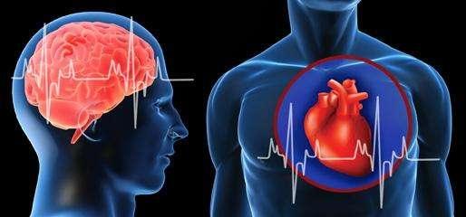 心脑血管四项基因检测
