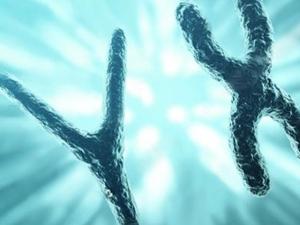 Y染色体微缺失检测